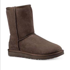Chocolate brown UGG classic